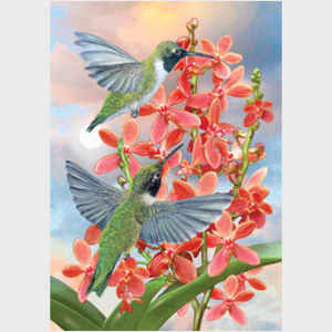 Black Chinned Hummingbirds with Orchids