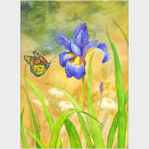 Butterfly and Iris