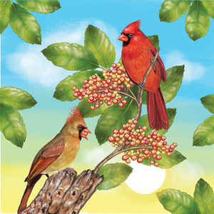 Cardinals in Summer
