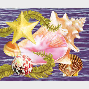 Conch and Starfish