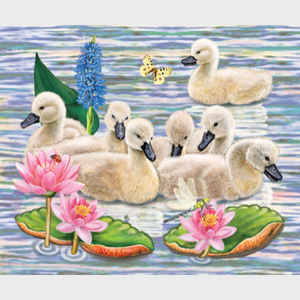 Cygnets' Neighborhood Swim