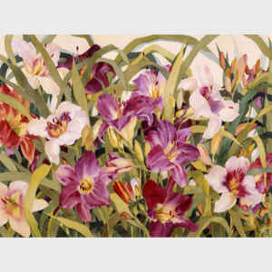 Dance of the Daylilies I