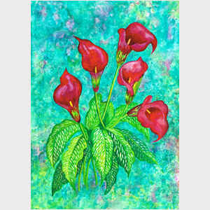 Decorator Red Calla Lilies