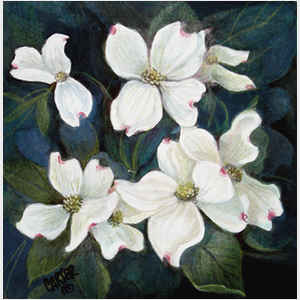 Dogwood Beauties