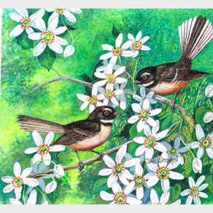 Fantails and Clematis