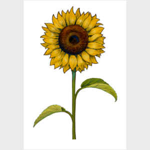 Floral Sunflower