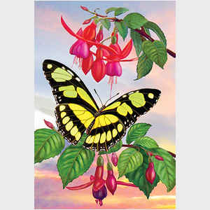 Fuchsia and Scarce Bamboo Butterfly