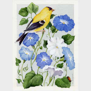 Goldfinch and Morning Glories