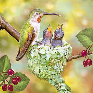Hummingbird Mother and Nestlings