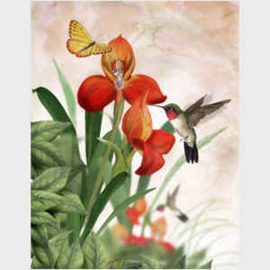 Tom Tom Wood Hummingbirds and Butterflies