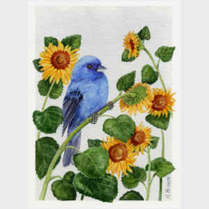 Indigo Bunting and Sunflower
