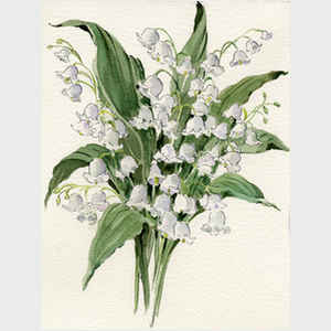 Lily of the Valley III