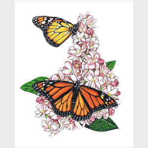 Monarch Butterfly II