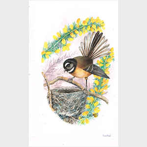 New Zealand Fantail with Nest