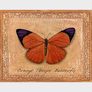 Orange Theope Butterfly