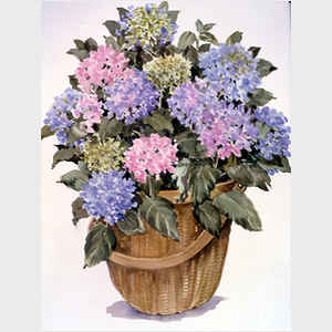 Pink and Blue Hydrangea Basket