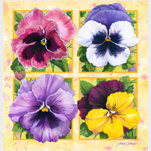 Pretty Pansies - no caption