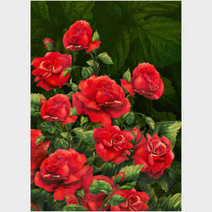 Red Roses, dark background