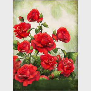 Red Roses, light background