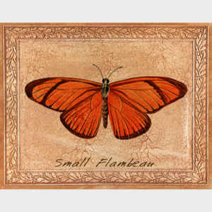 Small Flambeau Butterfly