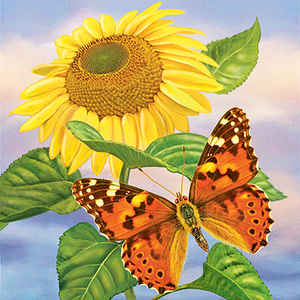 Sunflower and Painted Lady, square