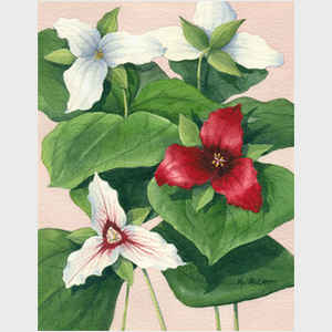 Three Trilliums