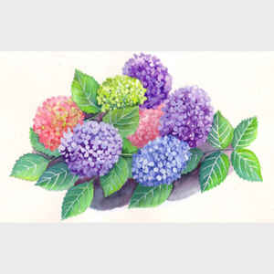 Tray of Hydrangeas