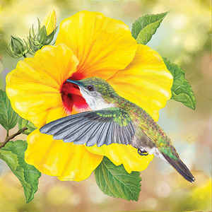 Vervain Hummingbird and Hibiscus